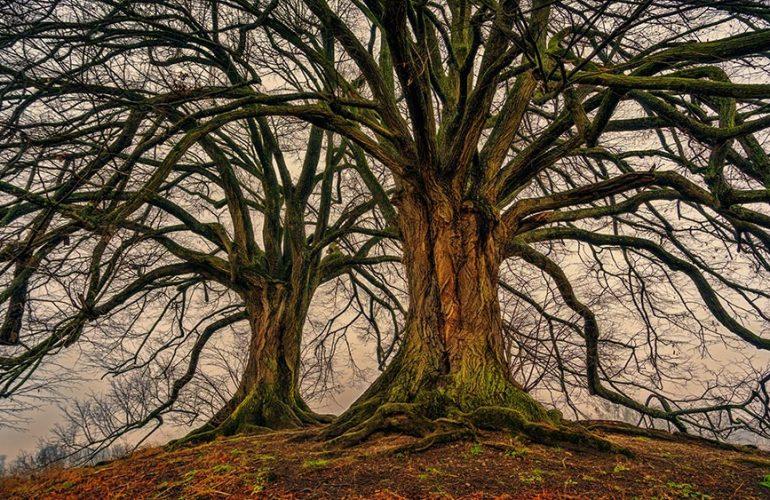 Sieben Thesen für eine konservativ-ökologische Wende