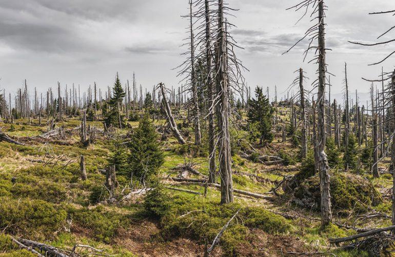 7. Leserumfrage: Prioritäten beim Umweltschutz
